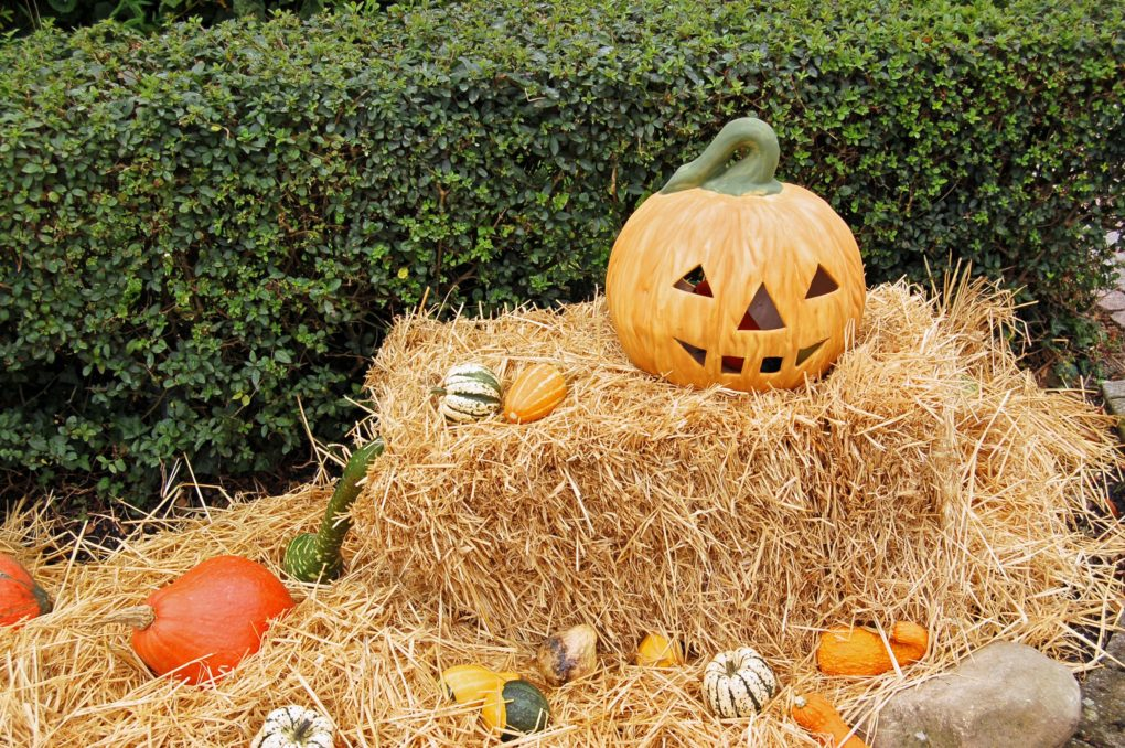 Things to Do for Halloween Inland Empire   Fiesta Village